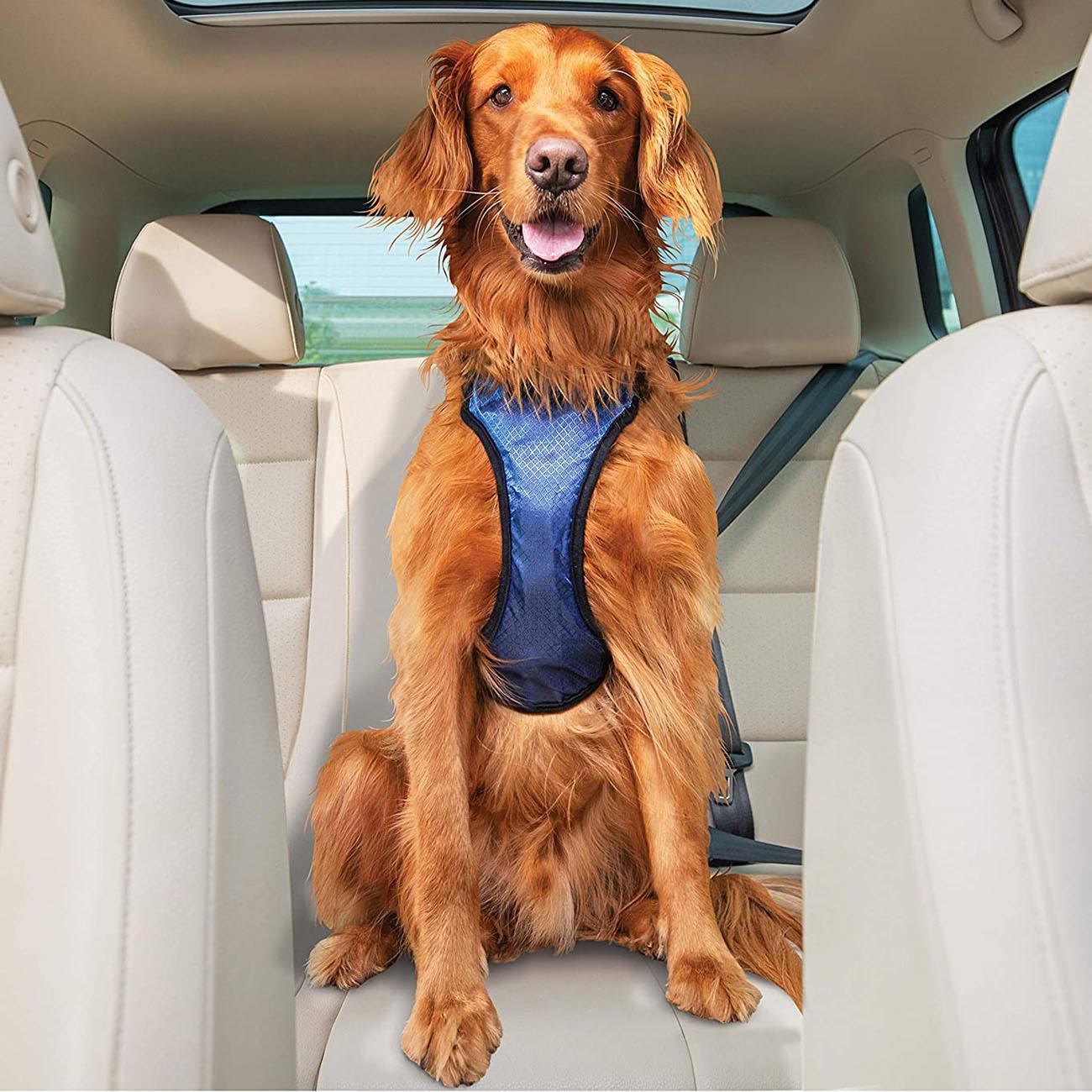 PetSafe Happy Ride Dog Safety Car Harness