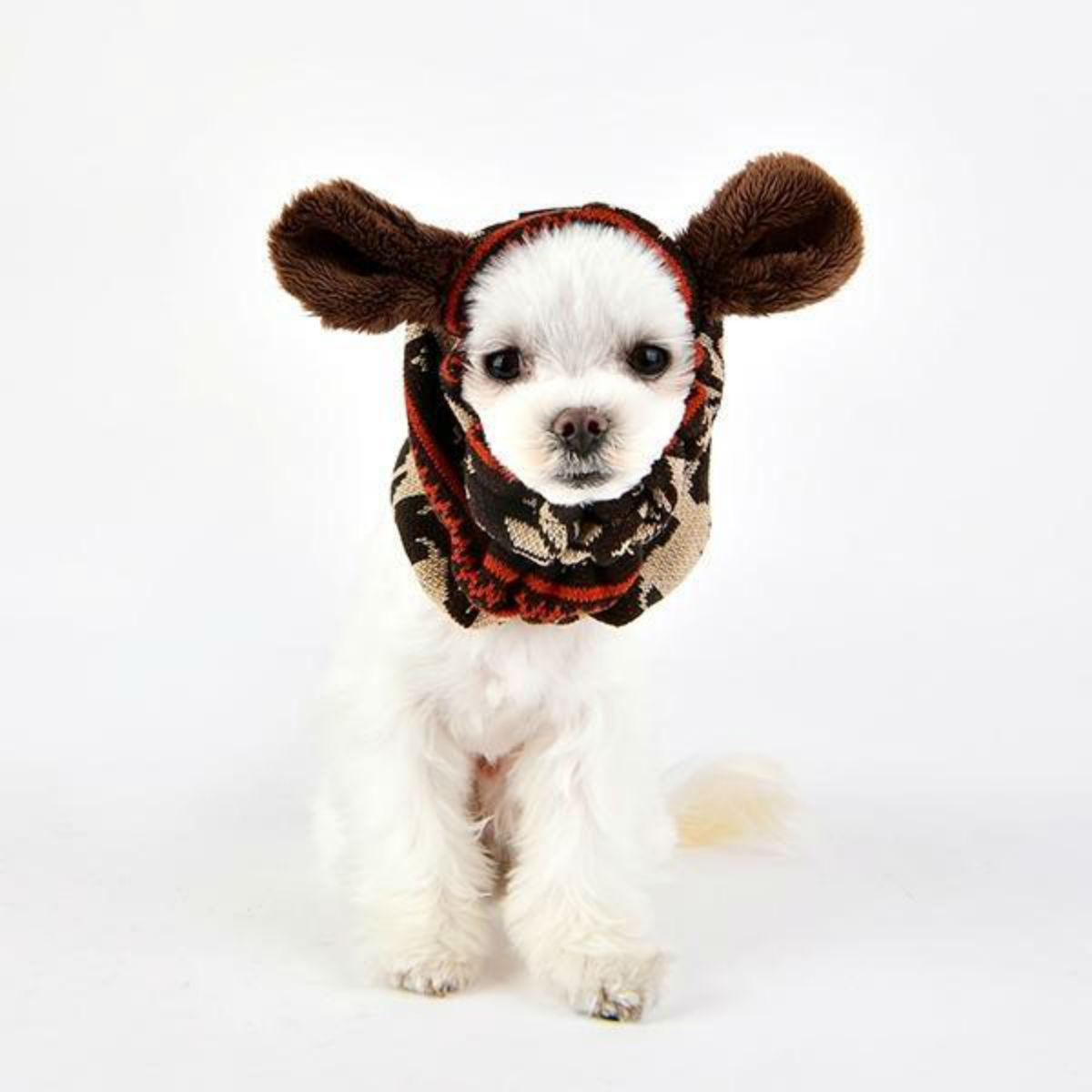 Prancer Dog Snood by Puppia - Brown