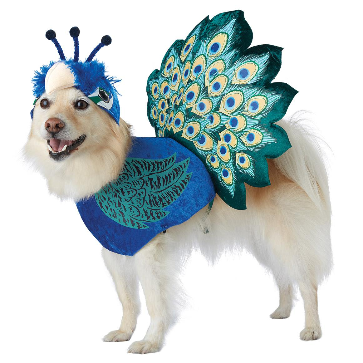7395416c691 Pretty as a Peacock Dog Costume | BaxterBoo