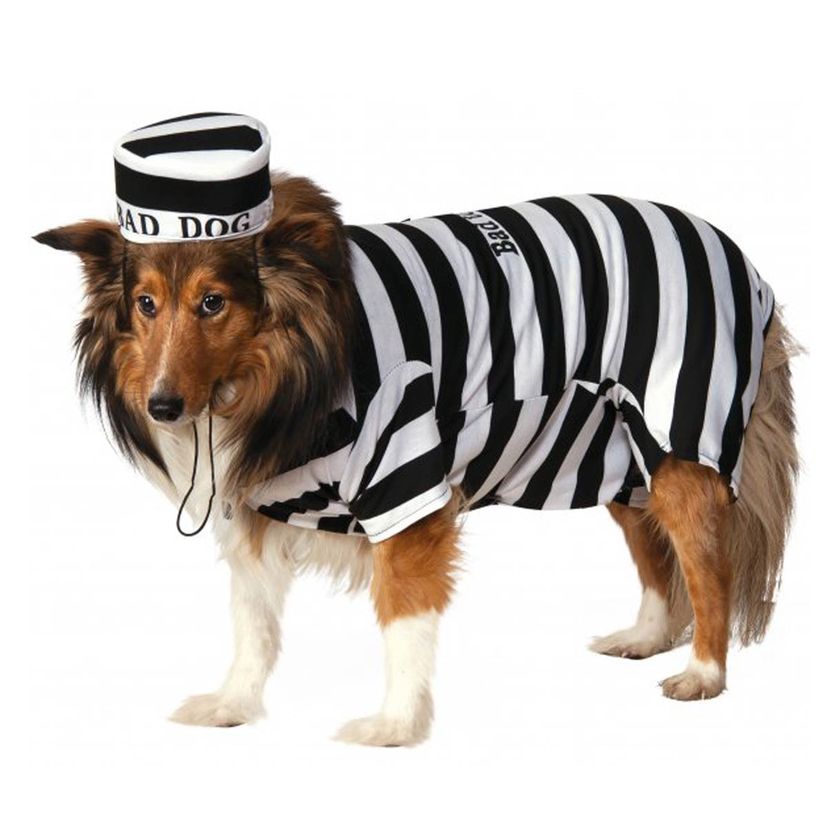 Prison Dog Halloween Costume with Same Day Shipping | BaxterBoo