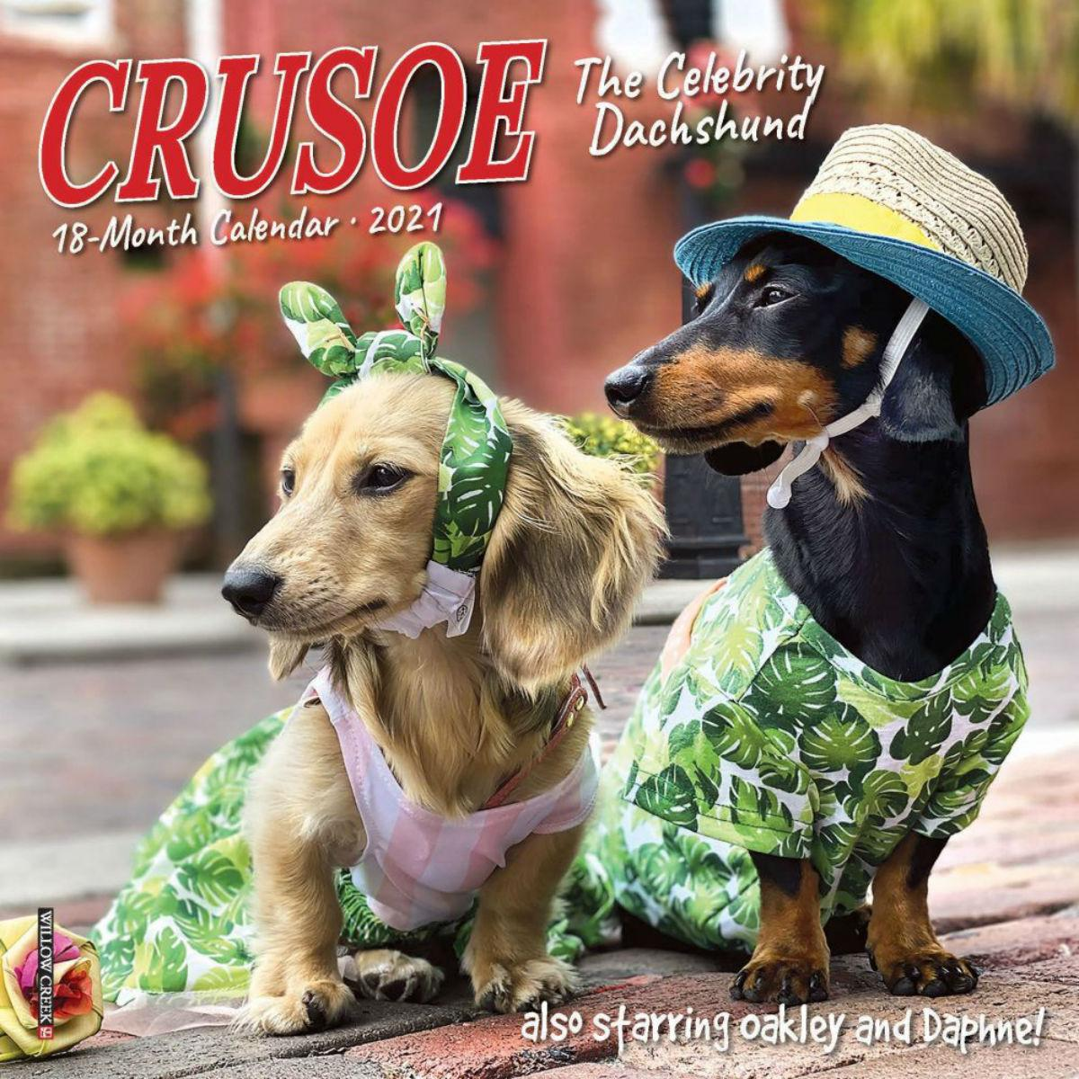 Crusoe the Celebrity Dachshund 2021 Mini Wall Calendar