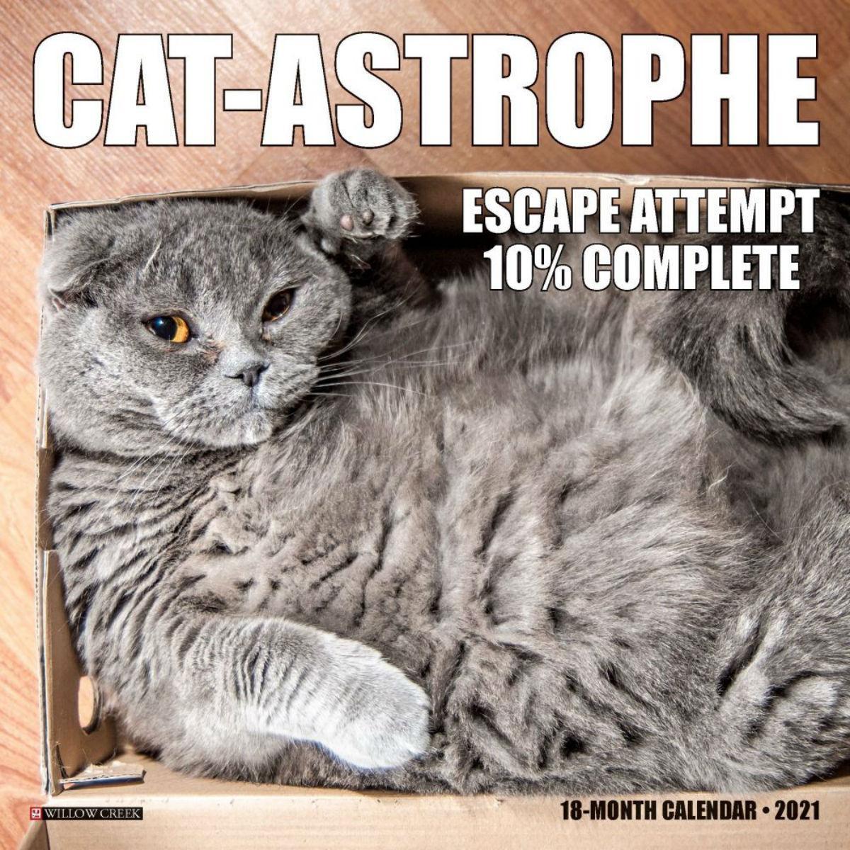 Cat-astrophe 2021 Mini Wall Calendar