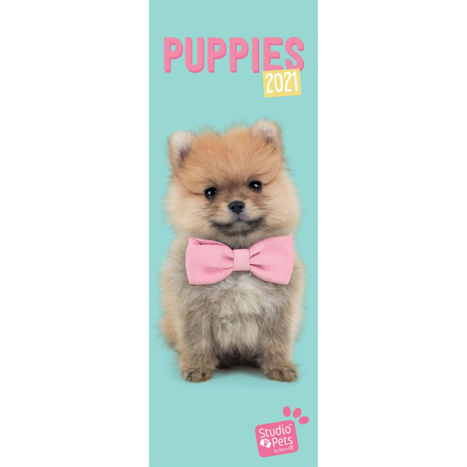 Puppies Studio Pets Slim 2021 Wall Calendar