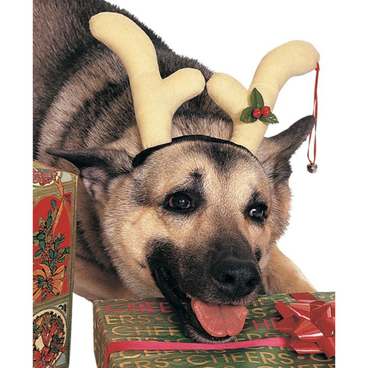 Reindeer Antlers Dog Costume by Rubies