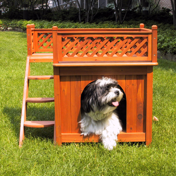 Room with a View Outdoor Dog House