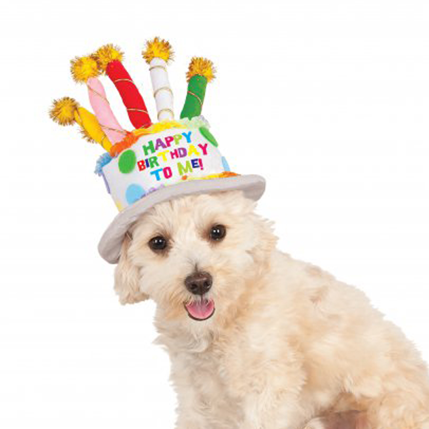 birthday dogs images rubie s birthday cake dog hat baxterboo 7034