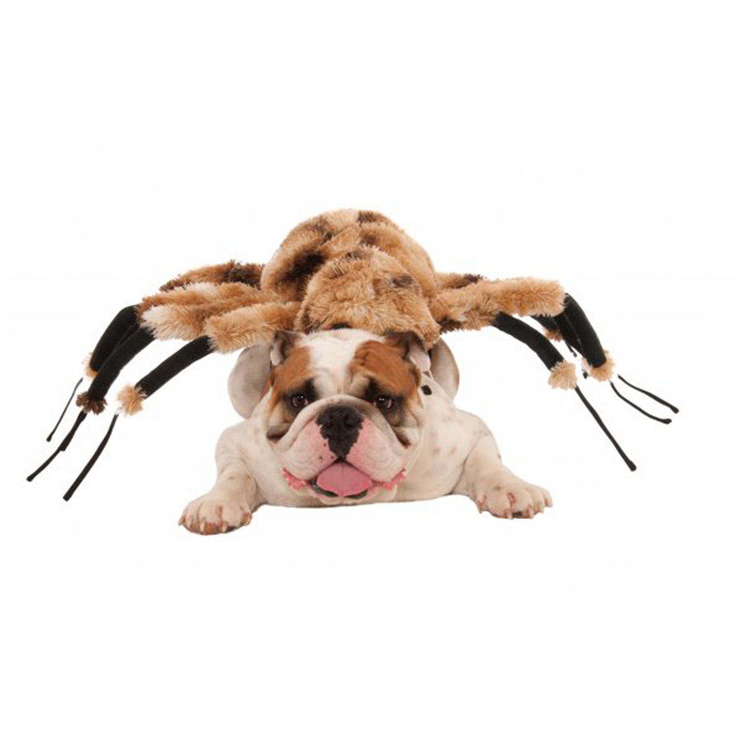 Rubieu0027s Giant Spider Dog Costume  sc 1 st  BaxterBoo & Rubieu0027s Giant Spider Dog Costume | BaxterBoo
