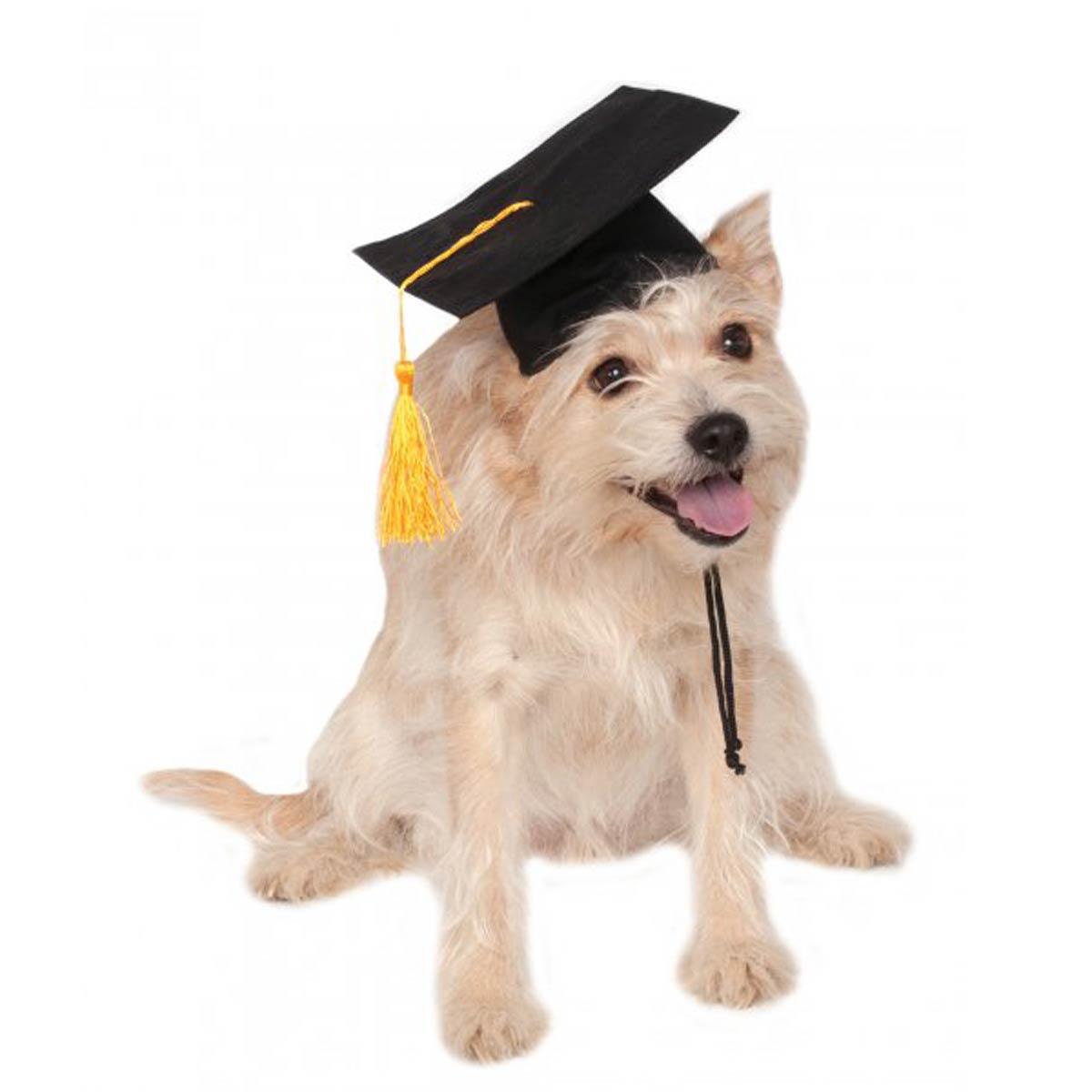Rubies Graduation Dog Hat - Black