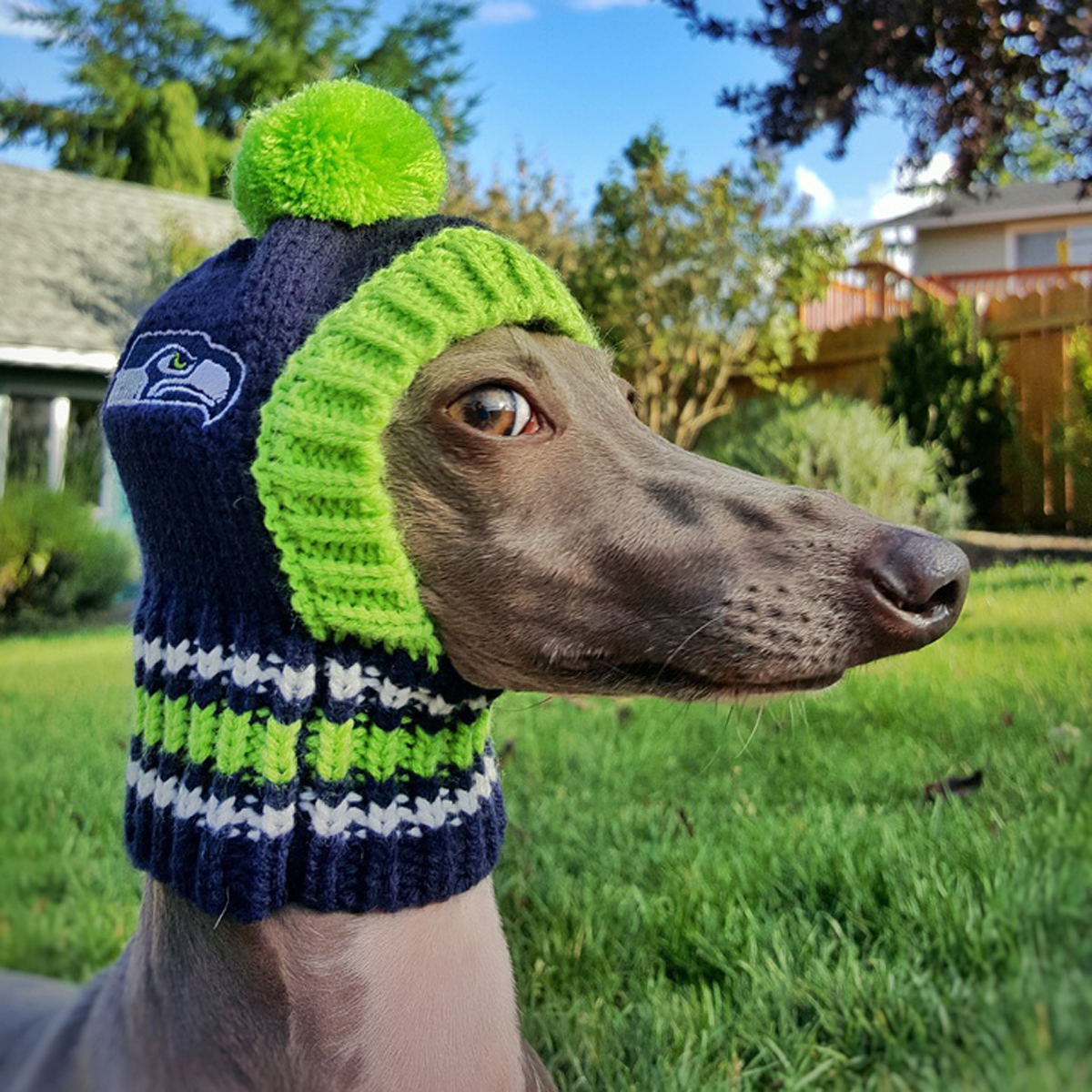 Seattle Seahawks Knit Dog Hat  501a89275