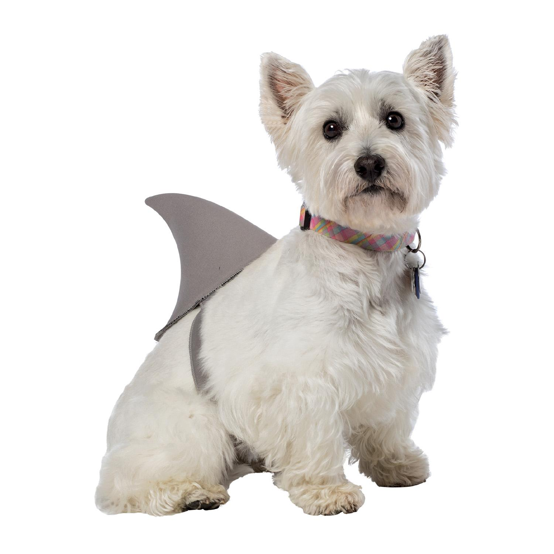 dog shark fin