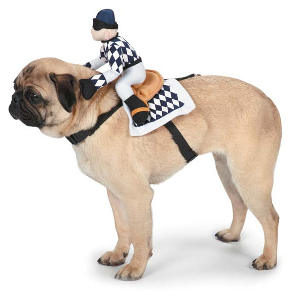 Show Jockey Saddle Dog Costume  sc 1 st  BaxterBoo & Show Jockey Saddle Dog Costume with Same Day Shipping | BaxterBoo