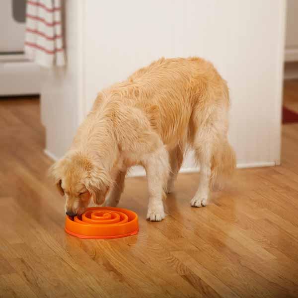 Fun Feeder Slow Feeder Dog Bowl - Coral Summer Orange