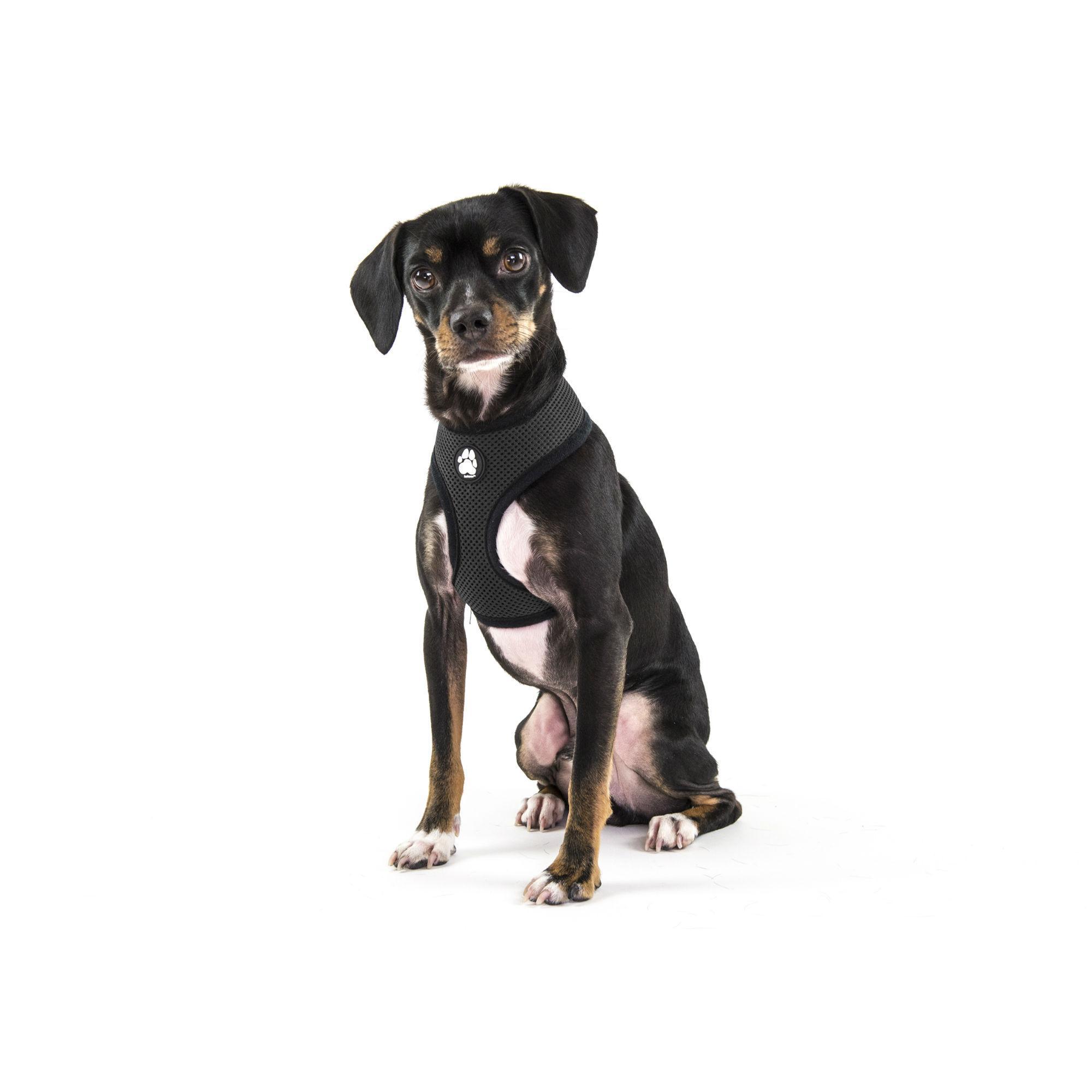 Soft & Comfy Mesh Dog Harness - Black