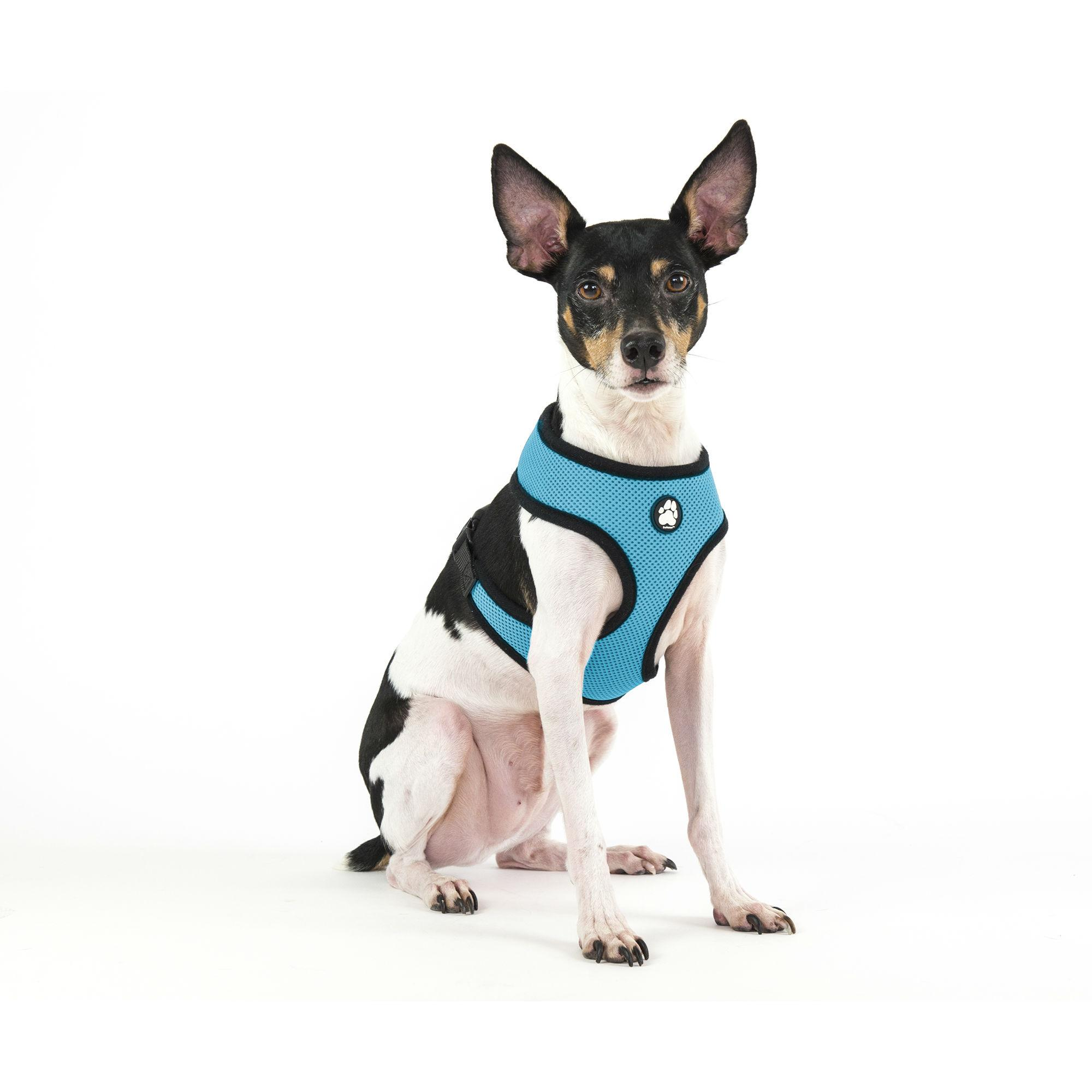 Soft & Comfy Mesh Dog Harness - Lagoon