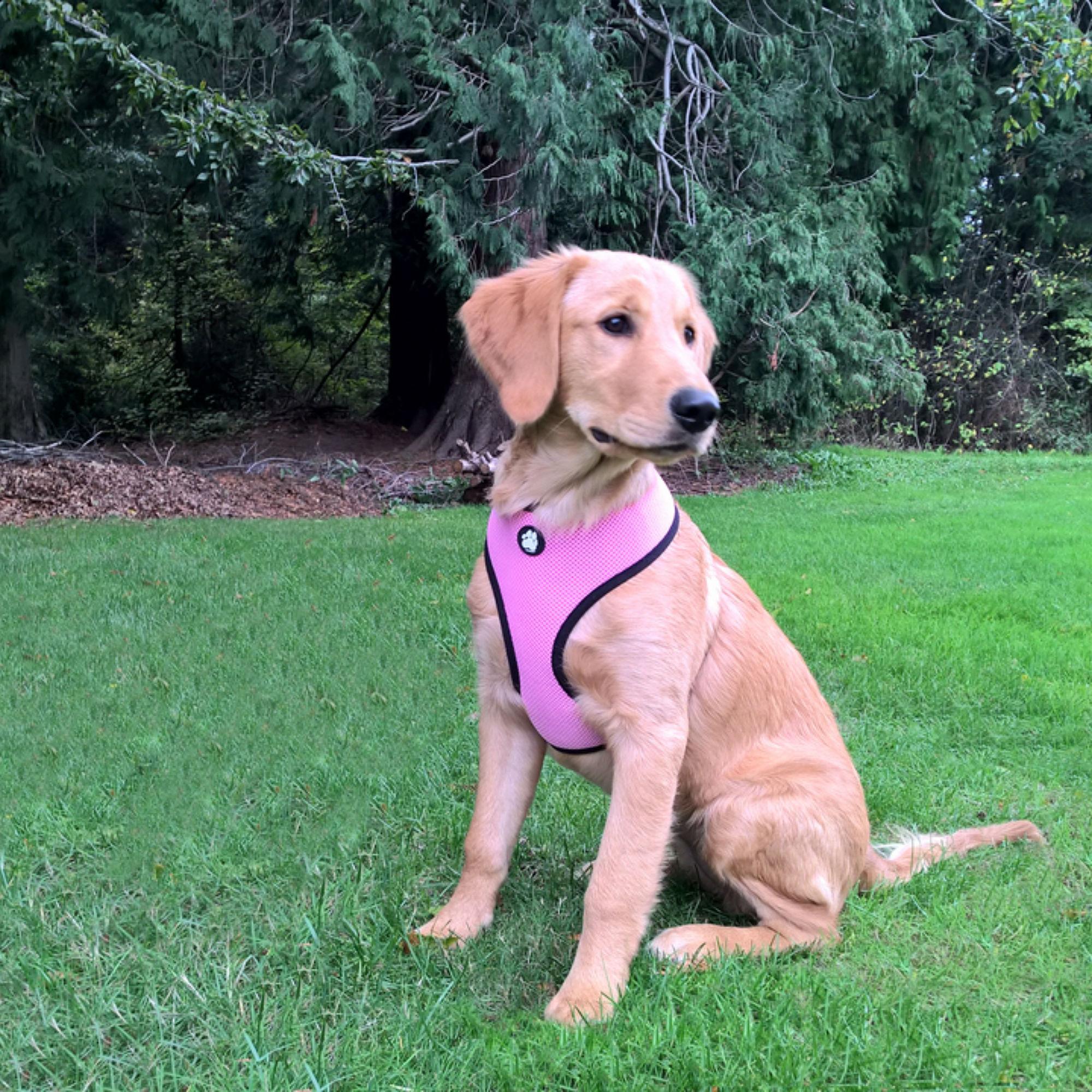 Soft & Comfy Mesh Dog Harness - Pink