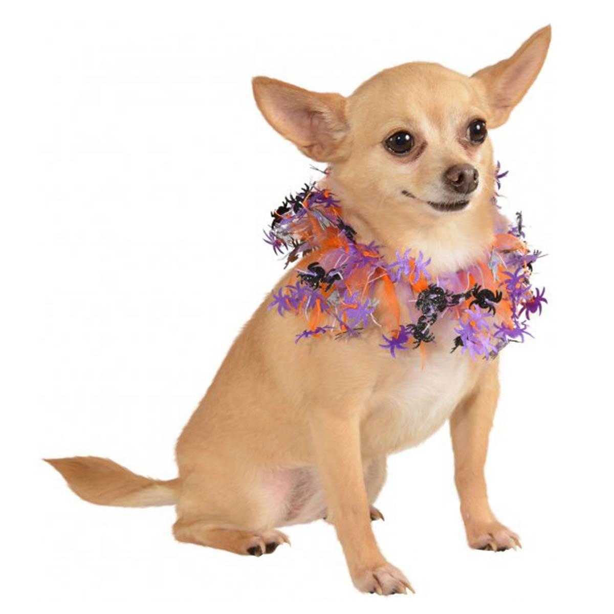 Spiders Short Fancy Dog Collar Scrunchie - Purple and Orange
