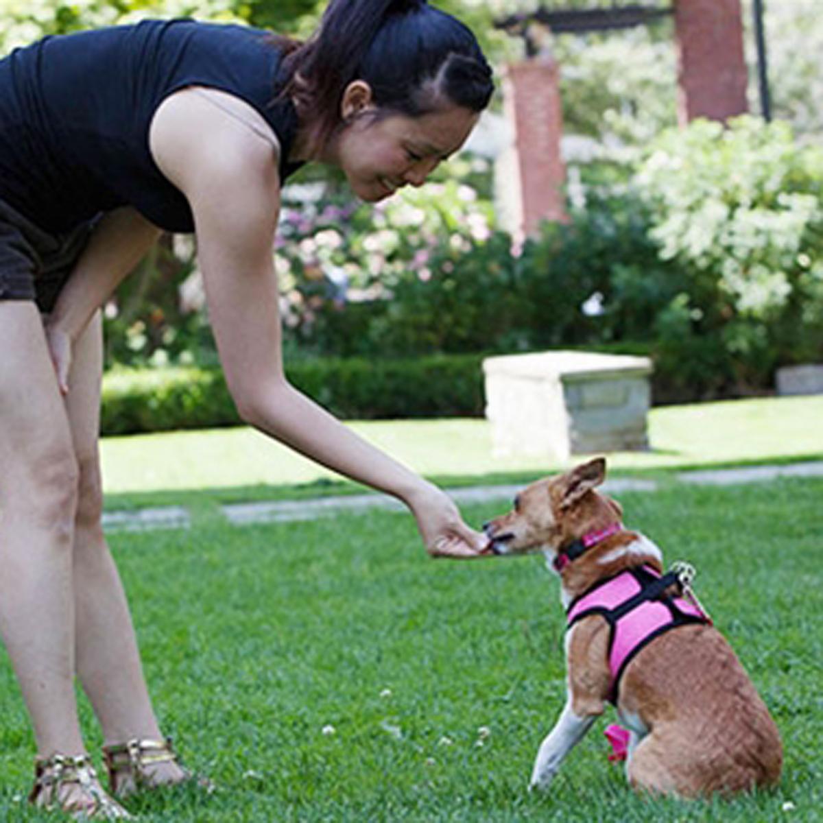 Step-in Cirque Dog Harness - Raspberry