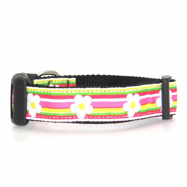 Striped Daisy Dog Collar