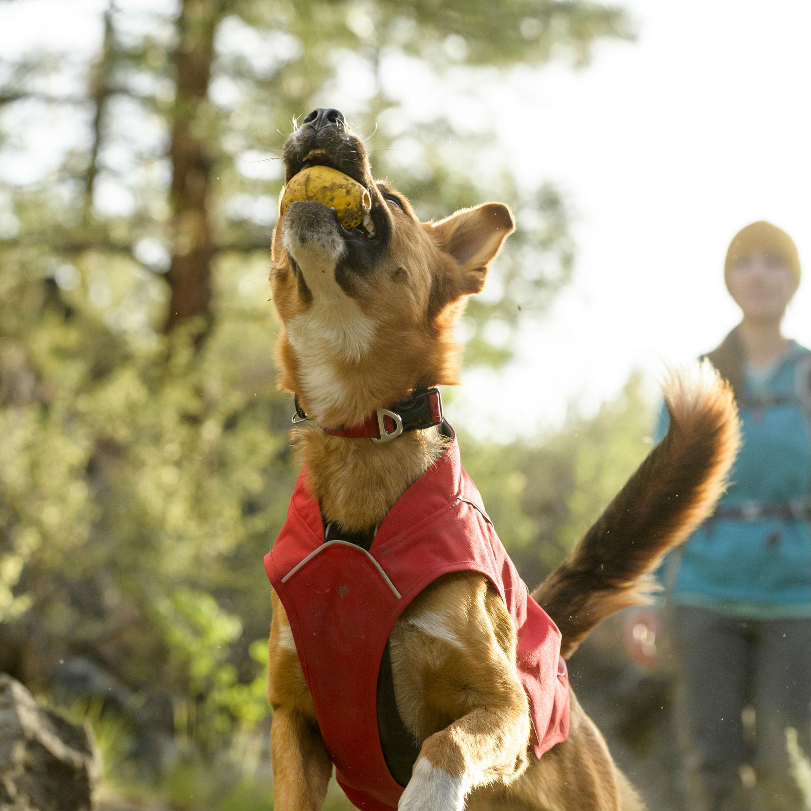 Turnup Dog Toy by RuffWear - Dandelion Yellow