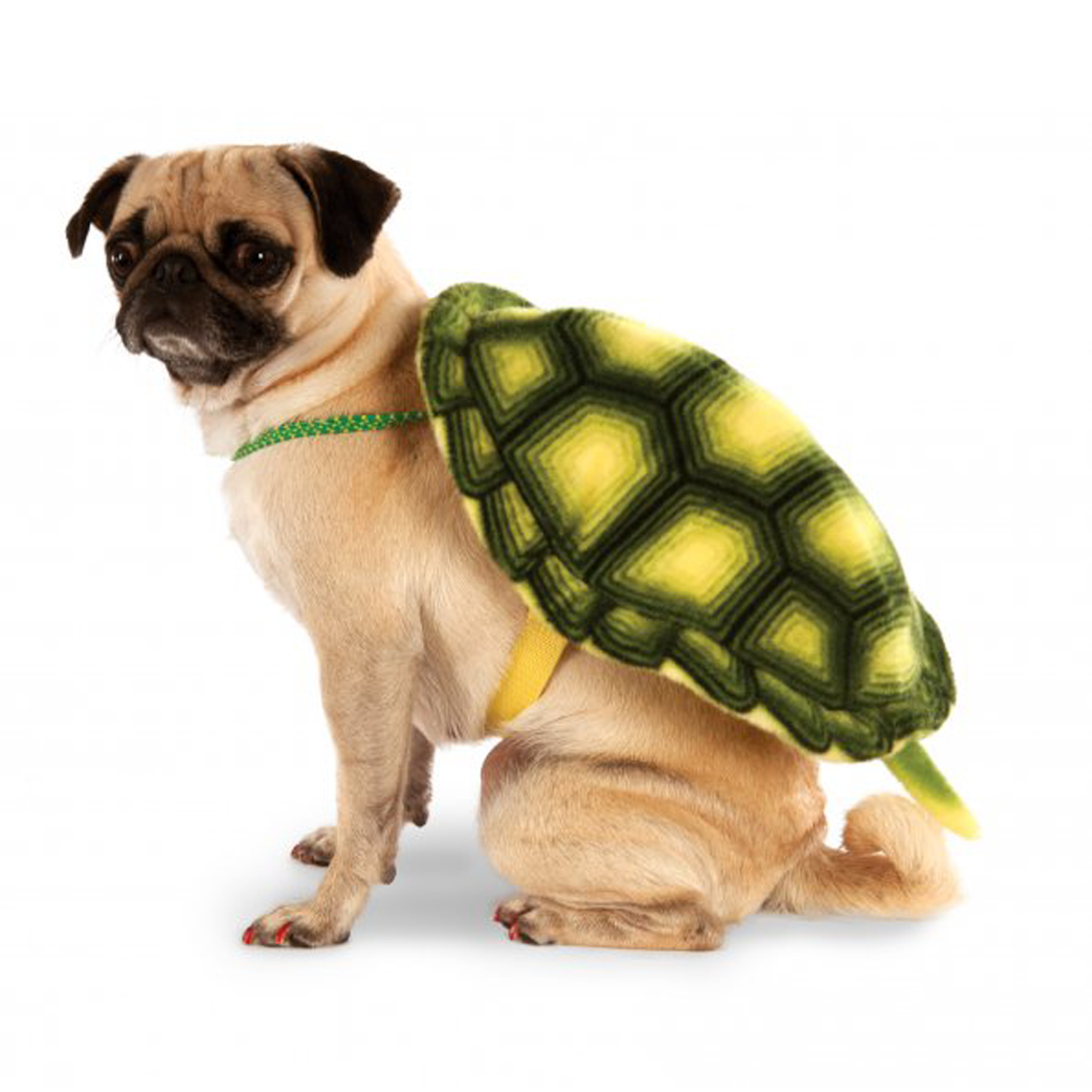 Turtle Shell Backpack Dog Costume  sc 1 st  BaxterBoo & Animal Dog Costumes | BaxterBoo