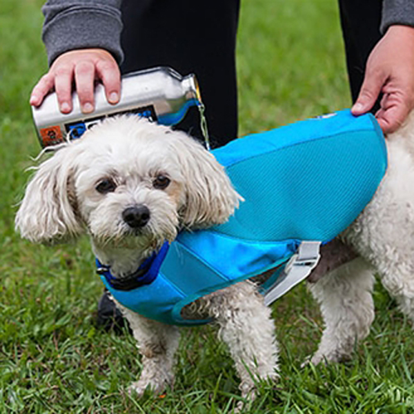 Ultimate Cooling Dog Coat by Canine Equipment
