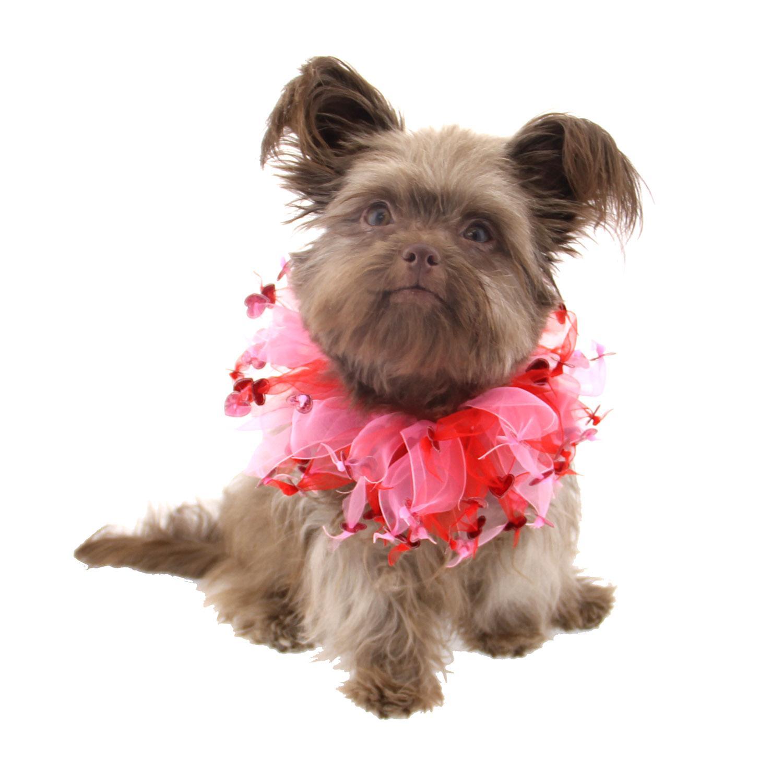 valentines day dog scrunchy red - Dog Valentines Day