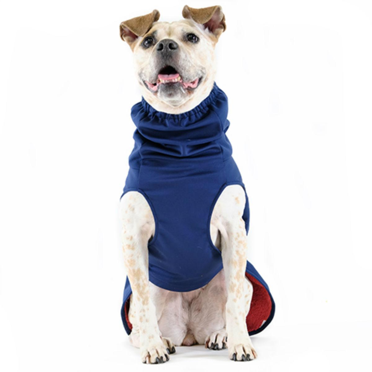 Winter Paw Dog Coat by Gold Paw - Navy with Red