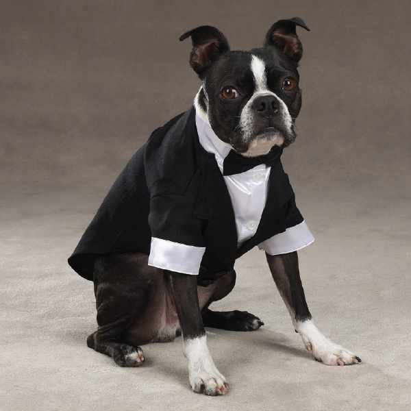 Yappily Ever After Wedding Groom Dog Tuxedo by East Side ...