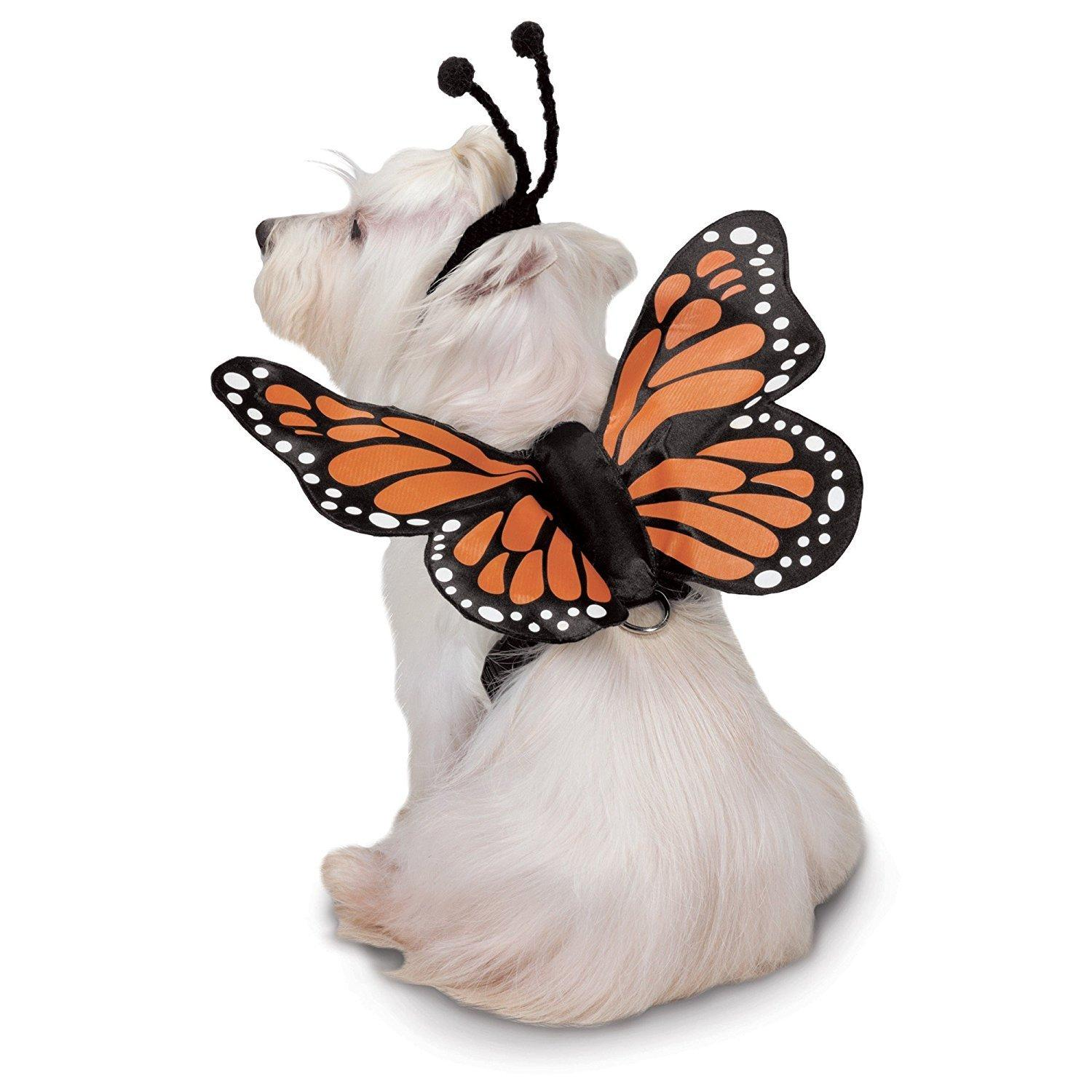 Zack and Zoey Butterfly Glow Wings Dog Harness Costume