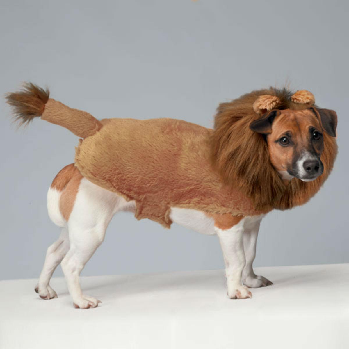 Zack & Zoey Fuzzy Lion Dog Costume