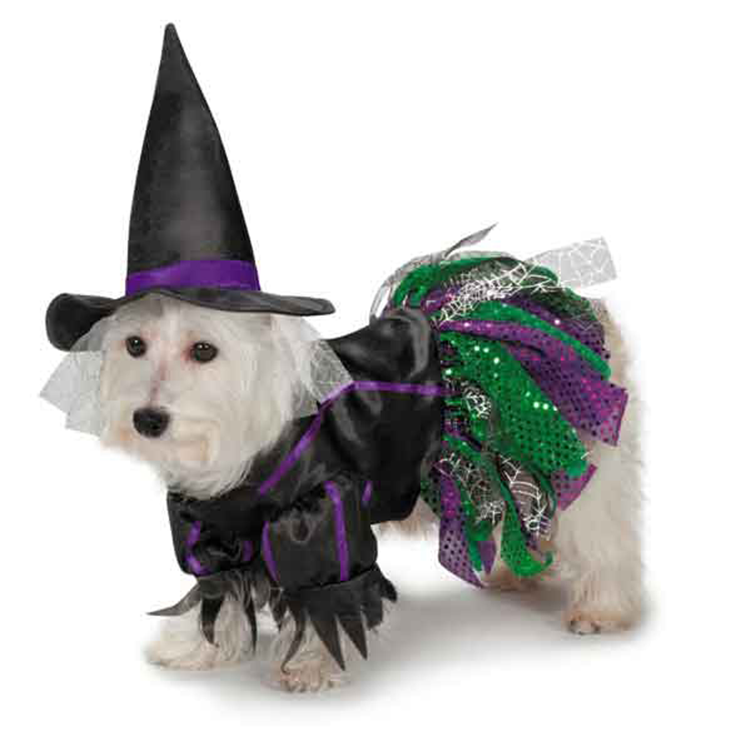 Zack and Zoey Scary Witch Dog Costume with Same Day Shipping ...