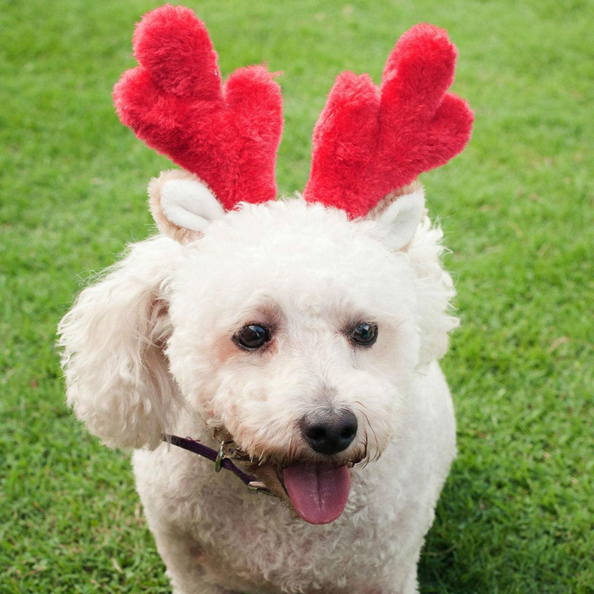 ZippyPaws Holiday Dog Antlers