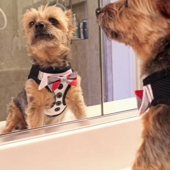 Dog Fashion Accessories products