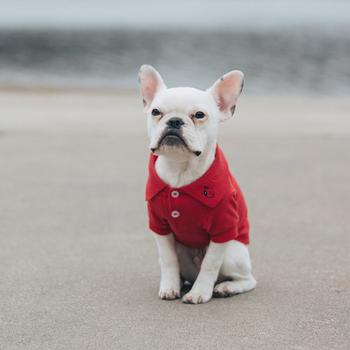 Dog Shirts products