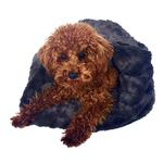 View Image 1 of 3-in-1 Cozy Dog Cuddle Sack - Bella Charcoal
