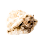 View Image 1 of 3-in-1 Cozy Dog Cuddle Sack - Caramel Mink