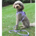 View Image 5 of 6 Way Multi-Function Dog Leash by Doggie Design - Paisley Purple