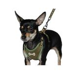 View Image 2 of ActiveGo Bone Harness by Dogo - Green