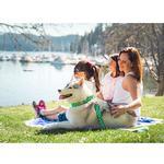 View Image 2 of All Webbing Martingale Dog Training Collar - Lemonade