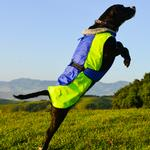 View Image 1 of Alpine All-Weather Dog Coat by Doggie Design - Blue and Green
