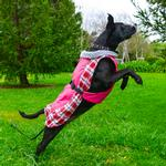 View Image 2 of Alpine All Weather Dog Coat by Doggie Design - Raspberry Plaid