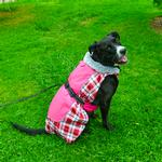 View Image 3 of Alpine All Weather Dog Coat by Doggie Design - Raspberry Plaid