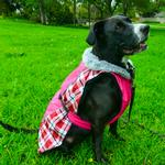 View Image 1 of Alpine All Weather Dog Coat by Doggie Design - Raspberry Plaid