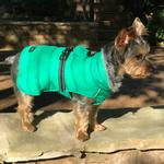 View Image 3 of Alpine Extreme Weather Puffer Dog Coat by Doggie Design - Arcadia