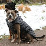 View Image 3 of Alpine Extreme Weather Puffer Dog Coat by Doggie Design - Black