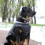 View Image 2 of Alpine Extreme Weather Puffer Dog Coat by Doggie Design - Black