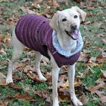 View Image 1 of Alpine Extreme Weather Puffer Dog Coat by Doggie Design - Burgundy