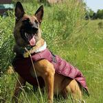 View Image 2 of Alpine Extreme Weather Puffer Dog Coat by Doggie Design - Burgundy