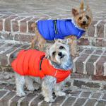 View Image 3 of Alpine Extreme Weather Puffer Dog Coat by Doggie Design - Blue