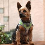View Image 3 of American River Choke-Free Dog Harness by Doggie Design - Limestone Gray Ombre